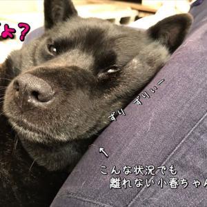 チバ道場のヨガ教室 編!