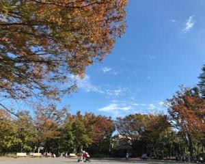 菊名池周りの秋色♪
