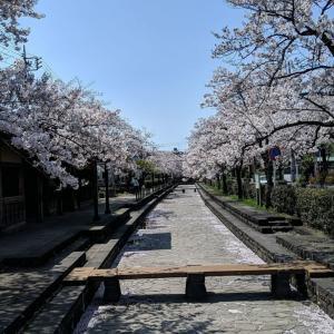 桜の季節は終わったけれど