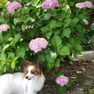 愛することで引き寄せる KIN170 白い磁気の犬
