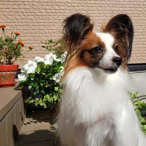 ハートからの愛を実感する KIN230 白い太陽の犬
