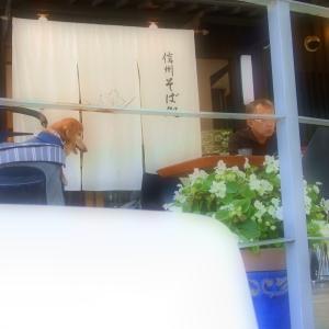 軽井沢でお蕎麦を♪