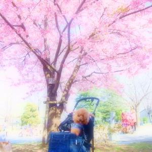 満開の時の河津桜をbackに♪