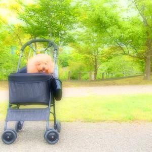新緑散歩♪