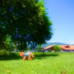 アウトレット芝の上で♪