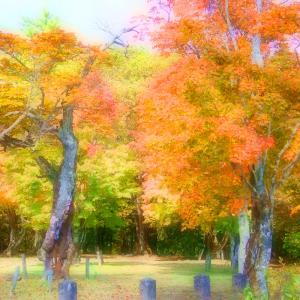 熊野神社の紅葉を♪