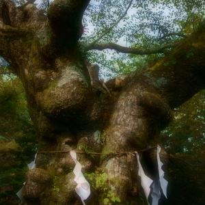 熊野神社の大木の♡♪