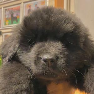 2か月の子犬・・・。