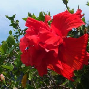 沖縄旅行、キャンセルしました・・・