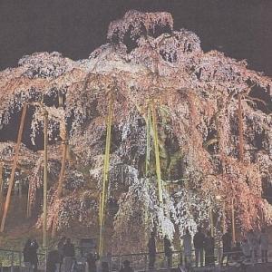 滝桜続き2
