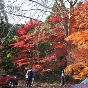 高萩市花貫渓谷の紅葉その3