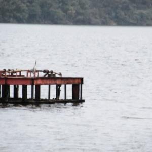 湖上露天風呂で見た大型の鳥は?