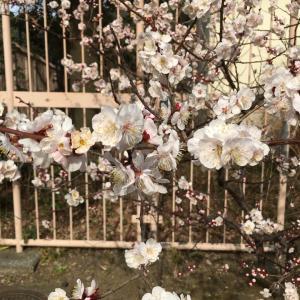 あんこ作 俳句『春が来た』