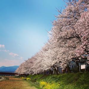 春の景色は今年も美しい