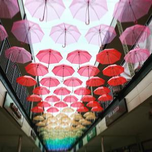 梅雨明けと日傘の色