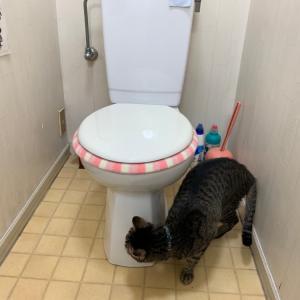 トイレのリフォーム思案中