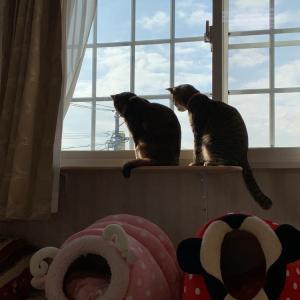 最近のうち猫たち