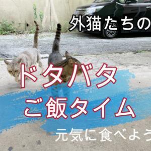 外猫たちのご飯タイム動画