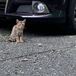 外猫の仔猫ランちゃん(*^^*)