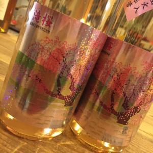 滝桜が咲いて。日本酒のお話しです