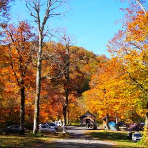 ブナの森で紅葉キャンプ
