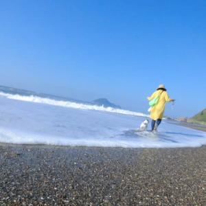 青い空と青い海 白い犬と黄色の・・・