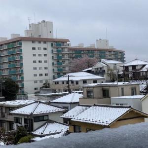 お昼まで雪がバンバン...