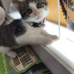 保護猫Kippy(キッピー)