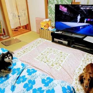 東京2020 ワンコもテレビ観戦 おうちで♪