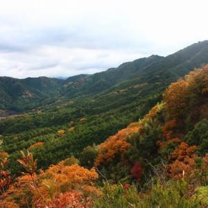 晩秋の飯盛山~叶ヶ嶽を周回する!