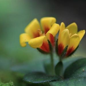 背振山系の魅惑の花を見に行く!(今年は、オニさんの豊作!)