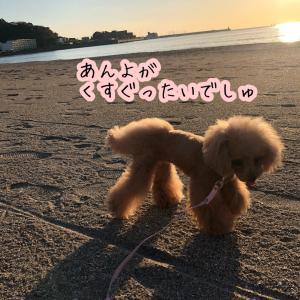ペコちゃん、初めての砂浜