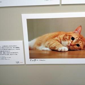 ぐっぴーくまくま部屋@新宿sippo写真展