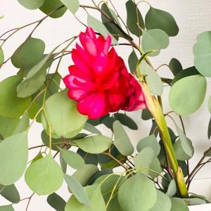 娘が選んだ「今週のお花」♡