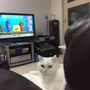 テレビ見てるの?