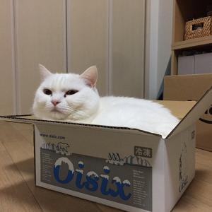 新箱のフィット感、堪能中。