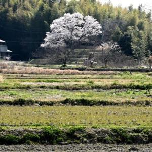 平成最後の春!桜&花:紀行