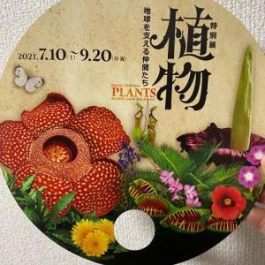 特別展「植物」地球を支える仲間たち