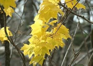 早池峰山からの帰路の紅葉