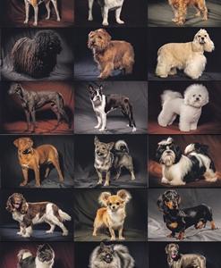 犬&猫のポストカードブック
