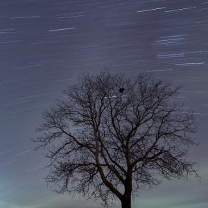 孤高の木に彩を