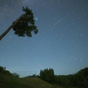 アシンメトリーの木と流星