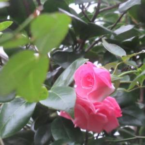 曇りがちでしたが晴れ間も。雨も降らなかったし。