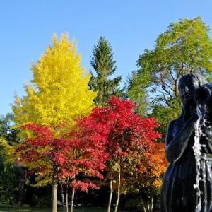 ぶらりと秋散策 札幌月寒公園の紅葉