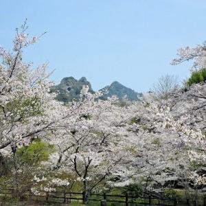 2019, 春の九洲路 春爛漫!「桜の穴場!並石ダム~国東へ」