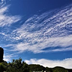 山の畑の梅雨間の青空