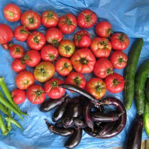 いつもの夏の収穫 西瓜、トマト、茄子、キュウリ、ピーマン、オクラ