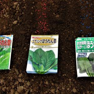 保証期限の過ぎた『ホウレンソウ』3種の種播き