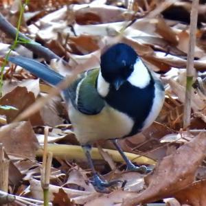 森林植物園で11種の野鳥と遊ぶ