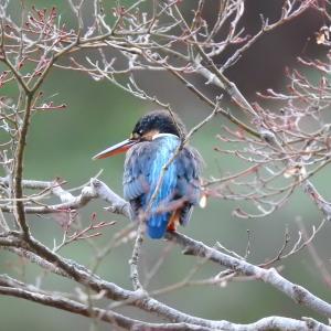 令和3年 初探鳥は翡翠(カワセミ)から 神戸森林植物園 9種の野鳥